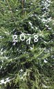 Paper numbers on fir tree green branches. Royalty Free Stock Photo