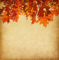 Paper with orange autumn leaves old Royalty Free Stock Images
