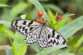 Paper rice butterfly on flower macro the black and white Stock Photo