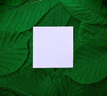 Paper sheet in the middle of the green leaves of the chestnut Royalty Free Stock Photo