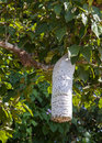 Paper Wasp Nest Royalty Free Stock Image