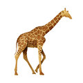 Papercut Giraffe Recycled Paper Stock Images