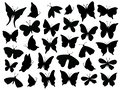 Papillon Silhouette. Mariposa ...
