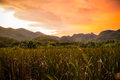 Papyrus fields in the mountain on sunset Royalty Free Stock Photos