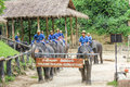 Elephants parade Royalty Free Stock Photo