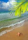 Paradies mit Palme Stockbild