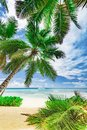 Paradise beach beautiful white sand with palm tree in the resort Royalty Free Stock Photo
