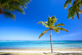 Paradise beach and palm tree in mauritius island Stock Photography