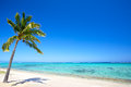 Paradise beach and palm tree in tropical island Royalty Free Stock Images