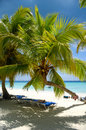 Paradise beach at saona island dominican republic Royalty Free Stock Image