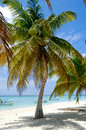 Paradise beach at saona island dominican republic Stock Photography