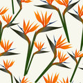 Paradise bird flower pattern Royalty Free Stock Photography