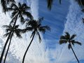 Paradise found, palm trees and blue skies Hawaii Royalty Free Stock Photo