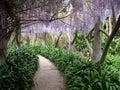 Paradise walkway Stock Photography