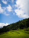 Paragliders a large group of circle in a thermal above rice paddies and villages near sarangkot pokhara nepal Royalty Free Stock Photos