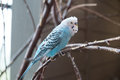 Parakeet a at the cheyenne mountain zoo in colorado Royalty Free Stock Images