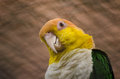 Parakeet portrait of a in a zoo Stock Photography