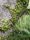 Parasite plant on a bark Stock Photography