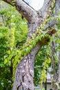 The parasite plants on big tree garden Royalty Free Stock Photos