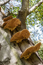 Parasitic fungi on a tree trunk Stock Image