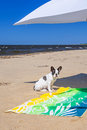 Parasol and dog on the beach of baltic sea in sobieszewo Royalty Free Stock Photography