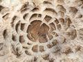 Parasol toadstool detail of macrolepiota procera cap Stock Photos