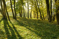 Parc d automne Photo libre de droits