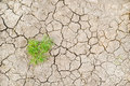 Parched ground Royalty Free Stock Photography