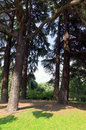 Parco sempione in milan high trees Stock Photos