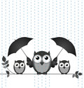 Parenting monochrome owl mother sheltering her young from the rain isolated on white background Stock Photo