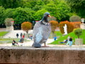 Paris pigeon and the Jardin du Luxembourg in the background