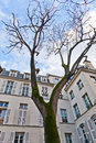 Paris - Place de Fustemberg Stock Photos
