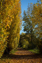 Park alley in the autumn beautiful rusty leaves Stock Photography