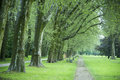 Park alley of trees in the after a rain shower Royalty Free Stock Photo