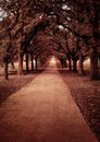 Park alley view in autumn tone picture Royalty Free Stock Photo