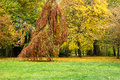 Park in autumn with a beech Stock Image