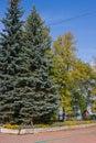 Park in an autumn sunny day Stock Photo