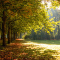 Park beautiful sunlight beginning autumn Stock Photo