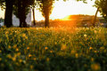 Park at beautiful sunset grass in sunny Royalty Free Stock Photos