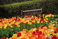 Park bench amongst red and yellow tulips at Cantigny Park in Wheaton, Illinois. Royalty Free Stock Photo