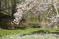 Park bench and magnolia tree green in a garden framed by blooming Royalty Free Stock Photos