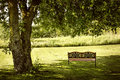 Park bench under tree lush shady in summer Stock Image