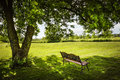 Park bench under tree lush shady in summer Royalty Free Stock Photo