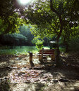 Park bench in woods forest bright light Royalty Free Stock Photo