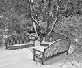 Park benches in the snow a trio of woods covered by a recent snowfall Royalty Free Stock Photography