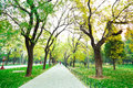 Park boulevard in the fresh air of the Royalty Free Stock Image