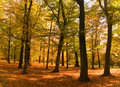 Park in bright autumnal colors Stock Photography