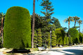 Park in cadiz parque genoves andalucia spain Royalty Free Stock Image