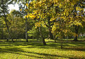 Park In Dabrowa Tarnowska. Pol...