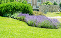 Park detail with lavender flowers bed Royalty Free Stock Images